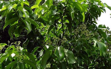 indian-bay-leaf-1707518_640.vcXbj5.jpg