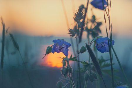 meadow-811339_1280.jpg