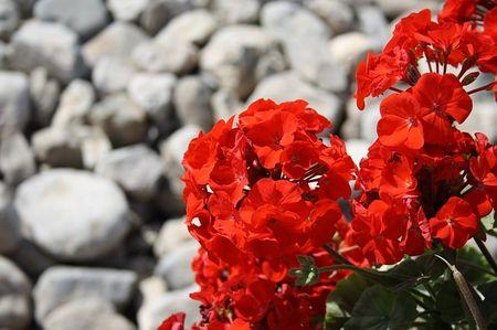 red-205385_640.jpg
