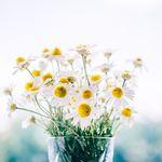 flowers-983897_1920.BEPJRo.jpg
